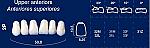 Upper Anterior Acrylic Resin Teeth #2P (NewTek)