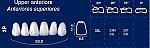 Upper Anterior Acrylic Resin Teeth #3P (NewTek)