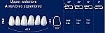 Upper Anterior Acrylic Resin Teeth #264 (NewTek)