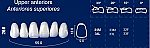 Upper Anterior Acrylic Resin Teeth #266 (NewTek)
