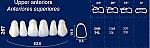 Upper Anterior Acrylic Resin Teeth #267 (NewTek)