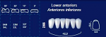 Lower Anterior Acrylic Resin Teeth #266 (NewTek)