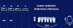 Lower Anterior Acrylic Resin Teeth #A23 (NewTek)