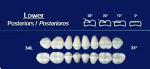 Lower Posterior Acrylic Resin Teeth #34L - NewTek