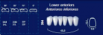 Lower Anterior Acrylic Resin Teeth #264 (NewTek)