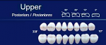 Upper Posterior Acrylic Resin Teeth #33F - NewTek