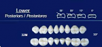 Lower Posterior Acrylic Resin Teeth #32M - NewTek