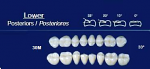 Lower Posterior Acrylic Resin Teeth #30M - NewTek