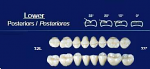 Lower Posterior Acrylic Resin Teeth #32L - NewTek