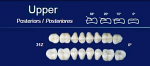 Upper Posterior Acrylic Resin Teeth #31Z - NexTek