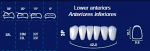 Lower Anterior Acrylic Resin Teeth #3P (NewTek)
