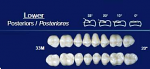 Lower Posterior Acrylic Resin Teeth #33M - NewTek