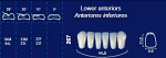 Lower Anterior Acrylic Resin Teeth #267 (NewTek)