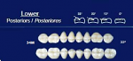 Lower Posterior Acrylic Resin Teeth #34M - NewTek