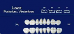 Lower Posterior Acrylic Resin Teeth #30L - NewTek